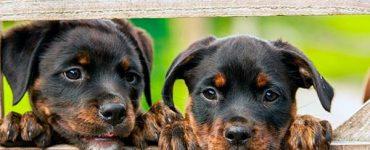 mundo de los perros